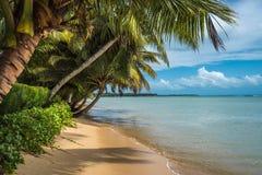 Тропический остров - море, небо и пальмы Стоковое Изображение RF