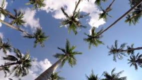Тропический остров рая с пальмами и синью сток-видео