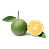 Тропический плодоовощ: Изолят сладкого апельсина на белой предпосылке Стоковое Изображение