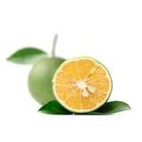 Тропический плодоовощ: Изолят сладкого апельсина на белой предпосылке Стоковая Фотография