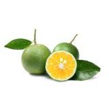Тропический плодоовощ: Изолят сладкого апельсина на белой предпосылке Стоковое Изображение RF