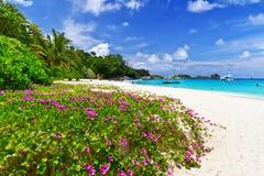 Тропический пляж в Таиланде Стоковое Изображение