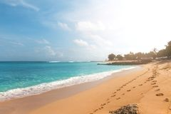 Тропический пляж с желтым песком, лазурным океаном и зелеными деревьями Стоковое Изображение