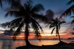 Тропический пляж с ладонью кокоса стоковая фотография