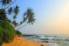 Тропический пляж с ладонью Стоковые Изображения RF