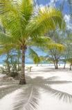 Тропический пляж с пальмами, отсутствие людей Стоковые Изображения RF