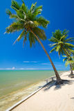 Тропический пляж с пальмами Стоковое Фото