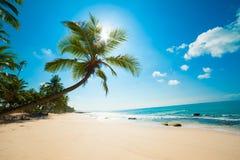 Тропический пляж Стоковое Изображение