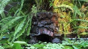 Тропический пруд в Вест-Инди сток-видео