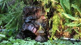 Тропический пруд в Вест-Инди видеоматериал