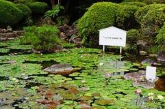 Тропический пруд лилии воды Стоковые Фотографии RF
