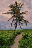 Тропический, пустой пляж, Miami Beach Стоковое Изображение
