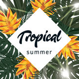 Тропический плакат вектора с тропическими листьями и цветками Стоковое фото RF