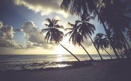Тропический пляж в Барбадосе Стоковое Изображение