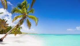 Тропический пляж в карибском море Стоковое Изображение RF