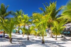 Тропический пляж, Доминиканская Республика Стоковое Изображение RF