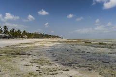 Тропический пляж Занзибара, панорамная фотография стоковые изображения rf