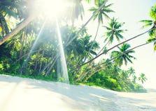 Тропический пляж рая с пальмой Стоковые Фотографии RF