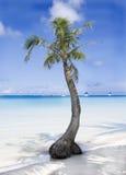 Тропический пляж с ладонью Стоковые Фотографии RF