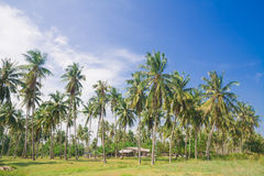 Тропический пляж с пальмами кокоса Стоковое Изображение RF
