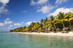 Тропический пляж с пальмами Стоковое Изображение RF