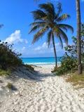 Тропический пляж с пальмой и морем стоковая фотография rf
