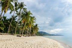 Тропический пляж с пальмой против облачного неба Стоковое Изображение