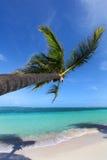 Тропический пляж с пальмой Стоковая Фотография