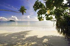 Тропический пляж с palns Стоковые Фото