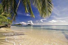 Тропический пляж с palns Стоковая Фотография
