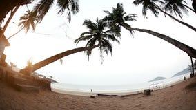 Тропический пляж утра видеоматериал