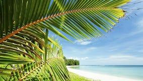 Тропический пляж акции видеоматериалы