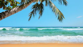 Тропический пляж сток-видео