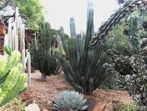 Тропический сад кактуса Стоковая Фотография RF