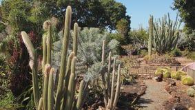 Тропический сад кактуса Стоковая Фотография