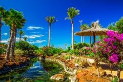 Тропический сад островного курорта с пальмами, цветками и рекой на Фуэртевентуре, Канарских островах Стоковые Изображения RF