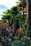 Тропический сад с ладонями и заводами, Барселоной Стоковое Изображение