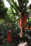 Тропический сад с экзотическими цветками Стоковое Изображение RF