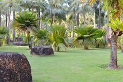 Тропический сад Стоковое Фото