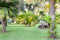 Тропический сад Стоковые Изображения