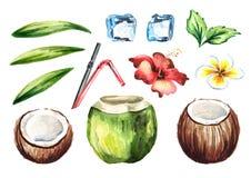 Тропический свежий коктеиль кокоса установил с соломами, мятой, plumeria, гибискусом цветет, кубы льда и листья зеленого цвета Пр Стоковые Изображения RF