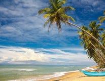 Тропический свободный полет Стоковые Фото