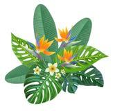 Тропический состав с цветками райской птицы также вектор иллюстрации притяжки corel Стоковое Фото
