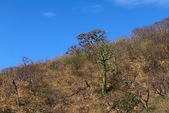 Тропический сухой лес в южном эквадоре Стоковая Фотография