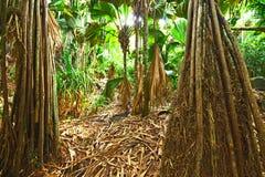 Тропический тропический лес на Сейшельских островах Стоковое Фото