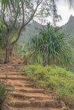 Тропический уклон стоковое фото rf