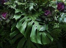 Тропический филодендрон Monstera листьев и орнаментальные заводы flor Стоковая Фотография