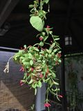 Тропический цвести цветков Стоковое Изображение