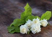 Тропический цветок жасмина на древесине стоковая фотография rf