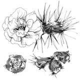 Тропический цветок кактуса в цветении иллюстрация акварели черно-белая monochrome Стоковые Изображения RF